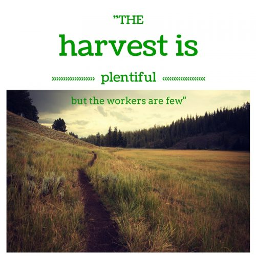 harvest is